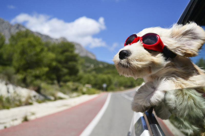 Wildflower Mobile Vet Dog Travel with Goggles Picture